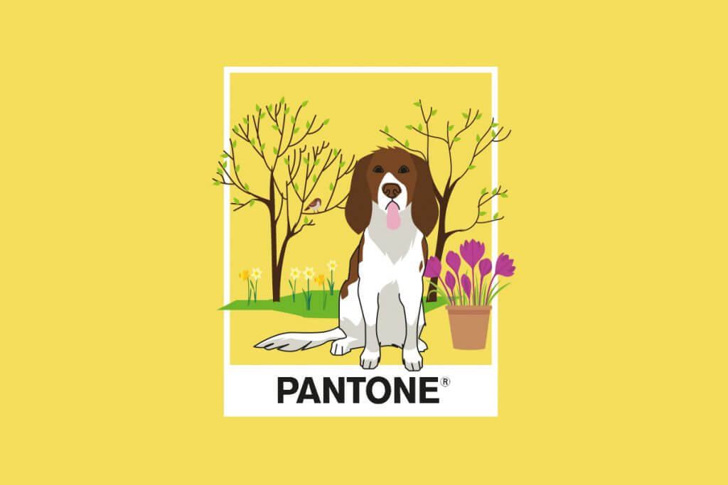 the 2021 Pantone Colour of the Year is PANTONE 13-0647 Illuminating - a bright and cheerful yellow sparkling with vivacity.
